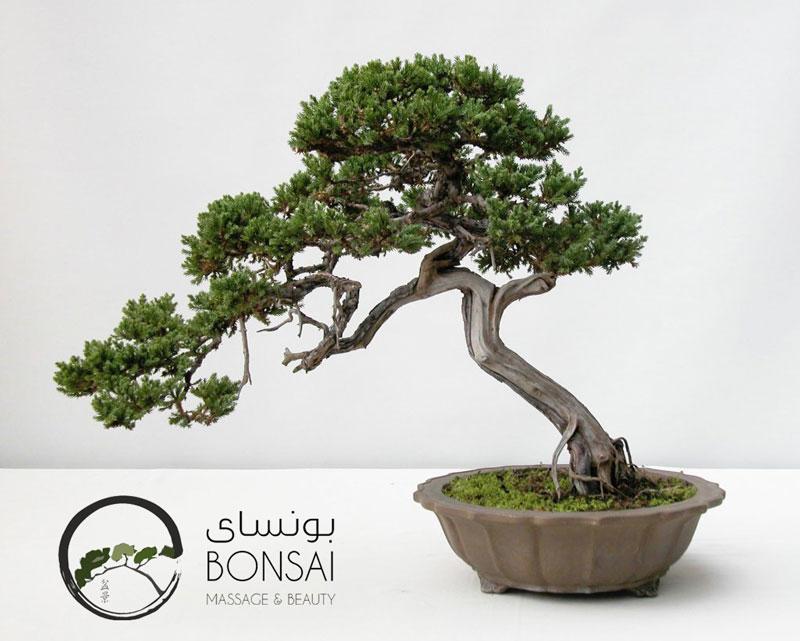 bonsai800-641